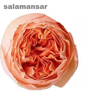Salamansar