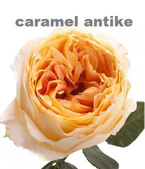 Carmel Antike