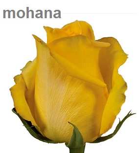 Mohana