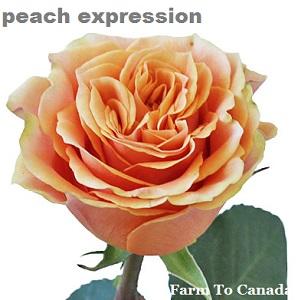 Peach Expression