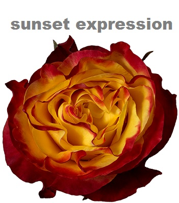 Sunset Expression