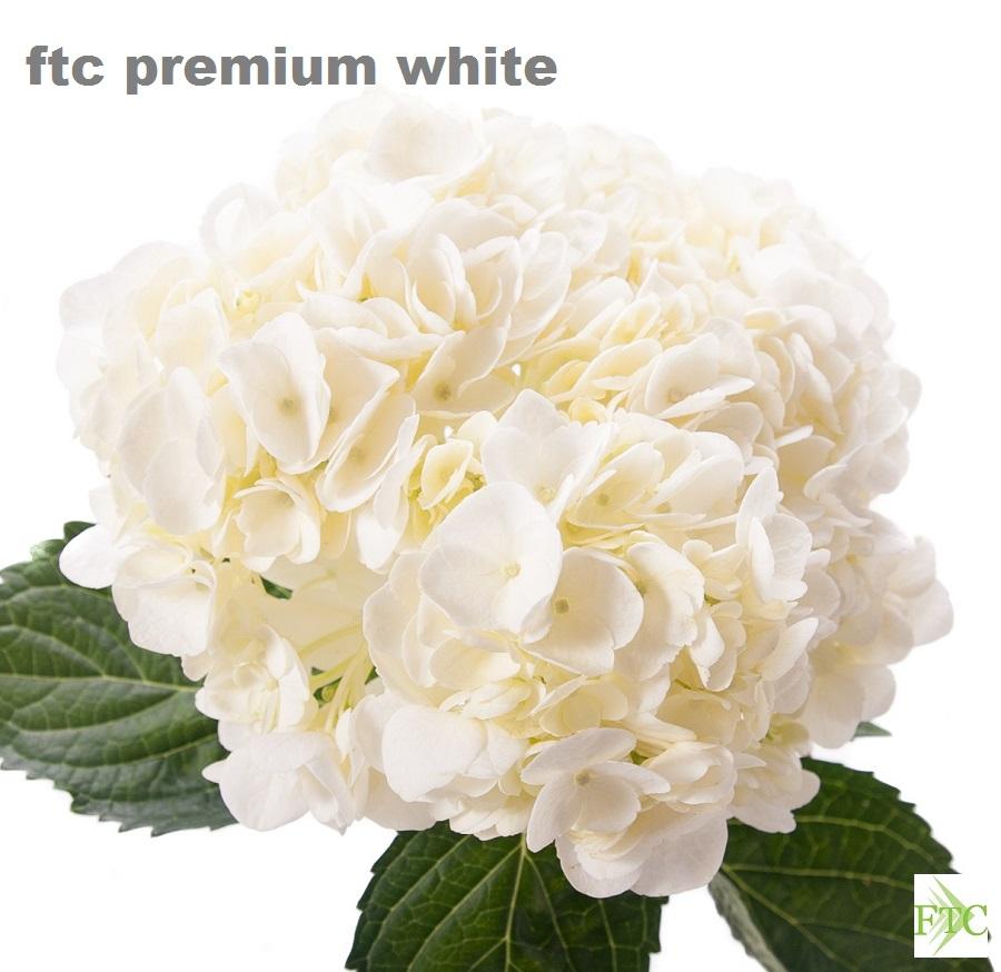Premium Size
