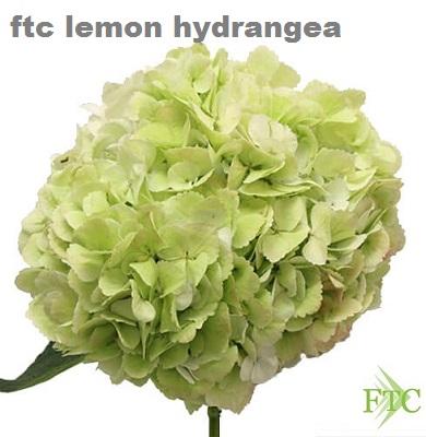 Lemon Premium