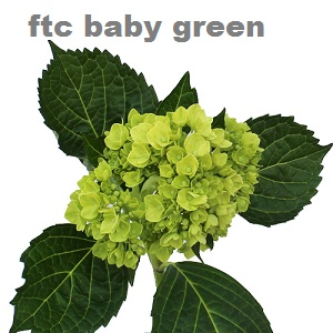 Baby Green