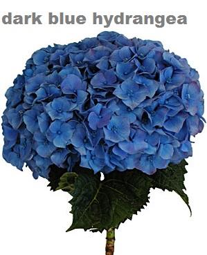 Dark Blue Premium