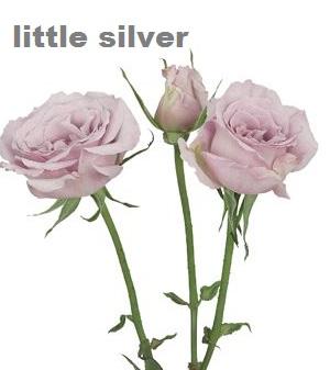 Little Silver