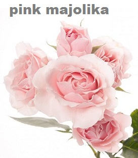 PInk Majolika