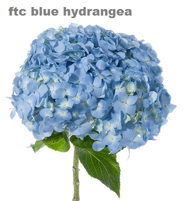 Light Blue Premium