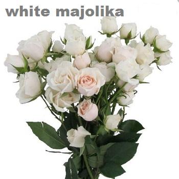 White Majolika