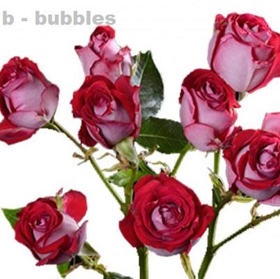 B-Bubbles