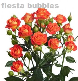 Fiesta Bubbles