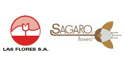 Sagaro Roses