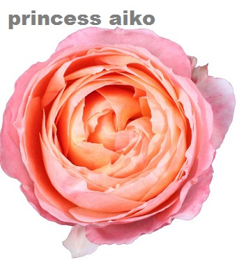 Princess Aiko