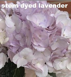 Stem Dyed Lavender