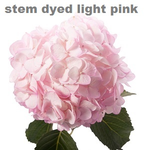 Stem Dyed Light PInk